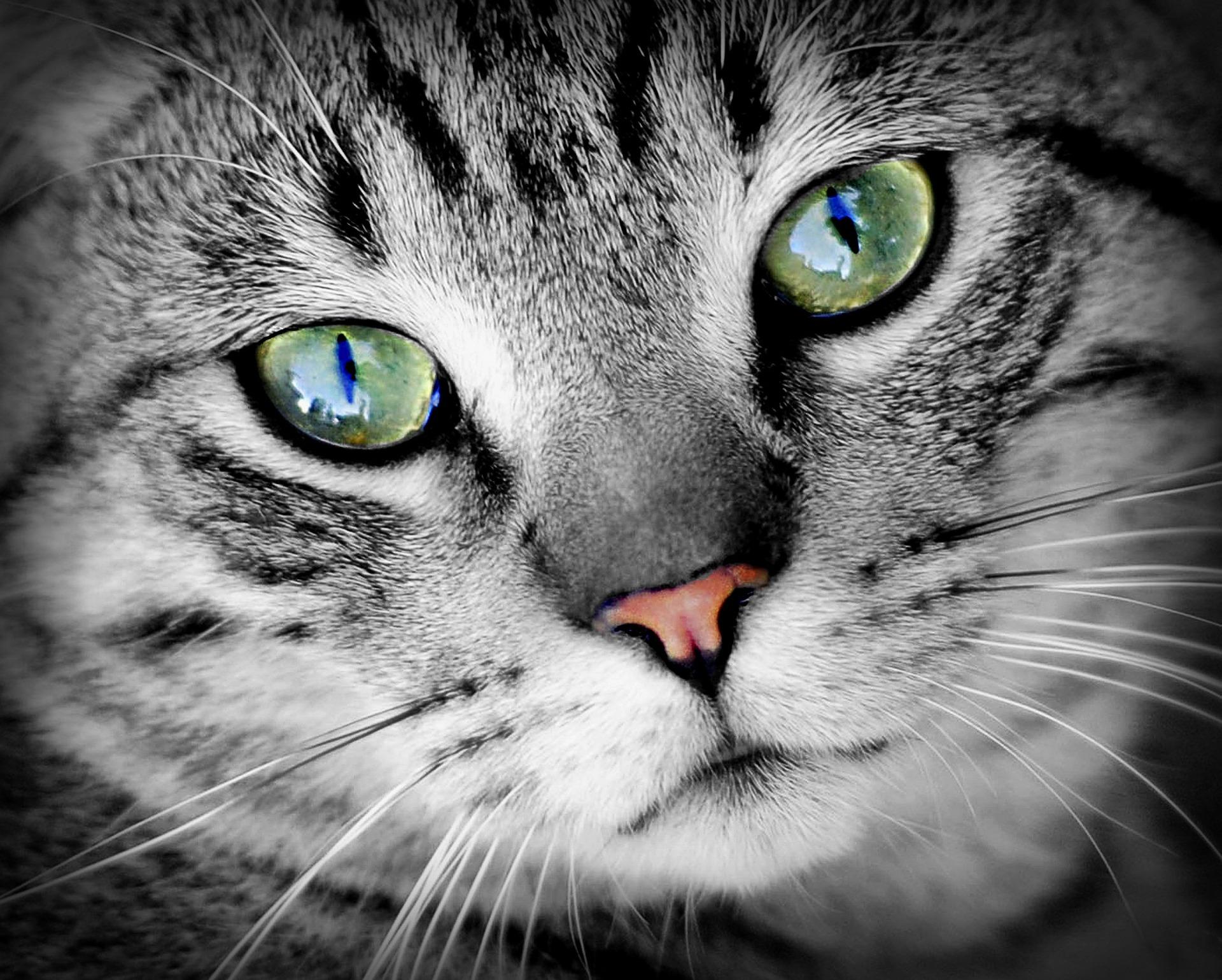 Die elektronische Katzenklappe