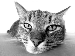 die elektronische Katzenklappe auf gadgetzone.de